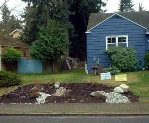 This is a rain water garden in winter.   These are very popular in Seattle and in the spring and summer will not require any water from the hose.