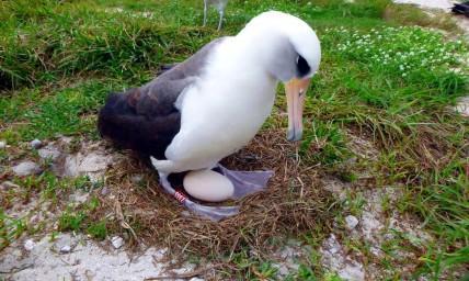 bird-with-egg