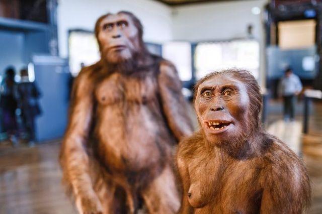 homo-erectus-man-woman-exhibit.jpg.653x0_q80_crop-smart