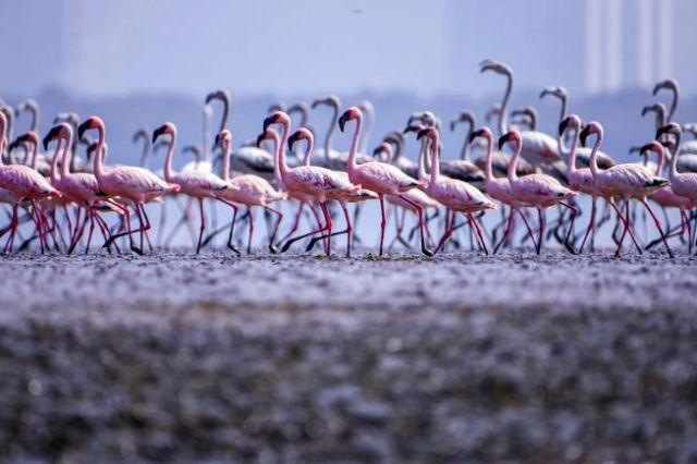 mumbai_flamingos.jpg.653x0_q80_crop-smart